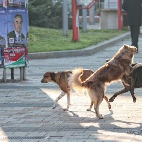 Предизборни борби- Плевен, октомври 2015