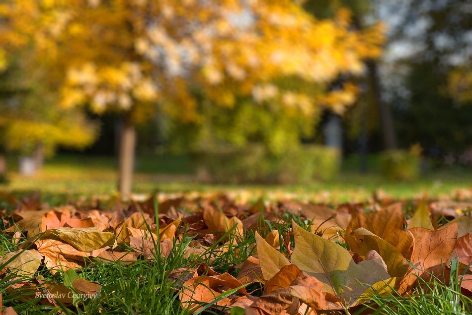 Есенни сюжети