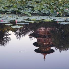 Езерото с лотосите