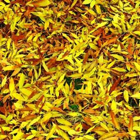 Есенни мозайки 2