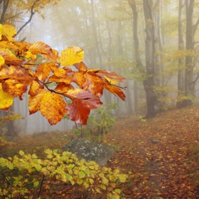 Витошка есен 2