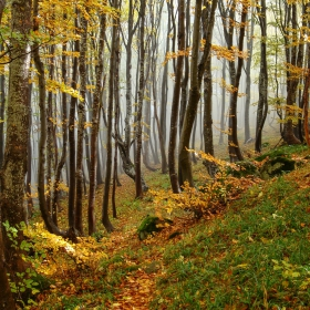 Витошка есен 3
