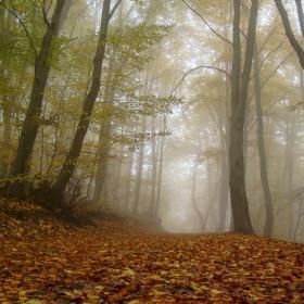 Витошка есен 4