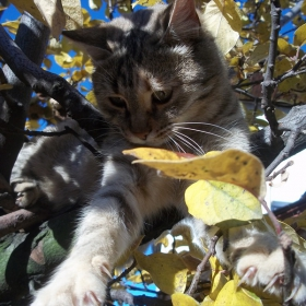 Котка на дърво