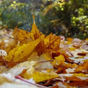 есенно настроение ...