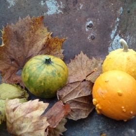 С цвят на есен
