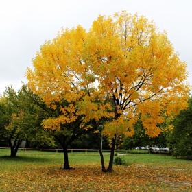 Моя есен