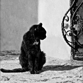 Черно и бяло