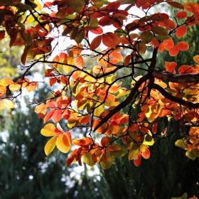 Слънчева есен