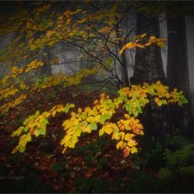 Есенни щрихи