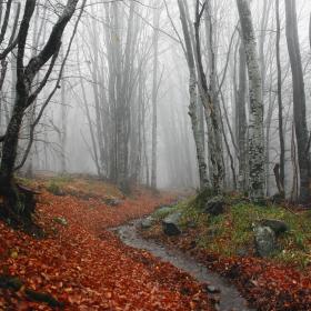 Есенна мъгла