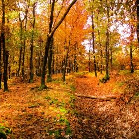 Топъл спомен от есента