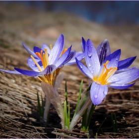 с дъх на пролет