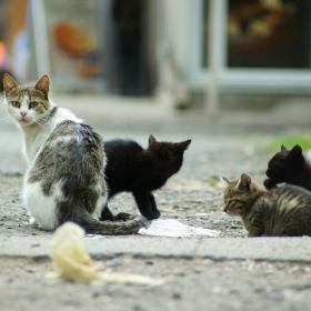 Котьовци
