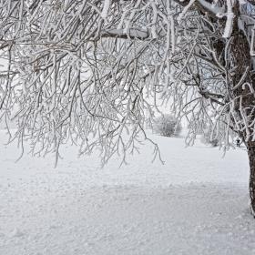 Снежни форми