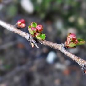 Почти пролетно