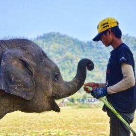 Бебе слон и неговият гледач