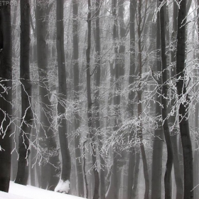 Зимните гори на Балкана