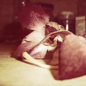 Орхидея върху кухненския плот