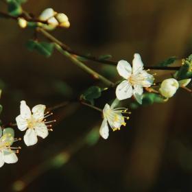 Пролет...:)