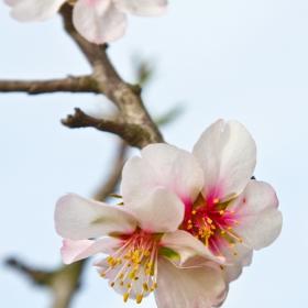 Пролет.