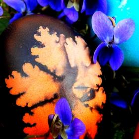 Великденското яйце се беше скрило в теменужките..!