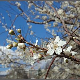 Моя, бяла пролет!