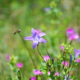 Цветя за Цветята