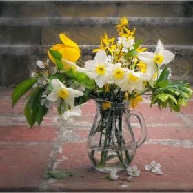 Цветя за празника...