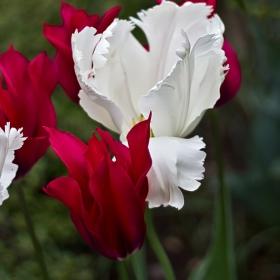Невинно бяло и романтично червено...