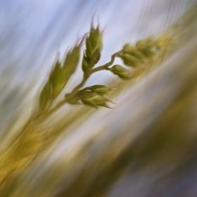 В играта на вятъра