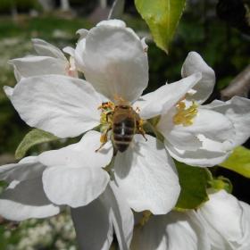 Пролетно...