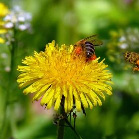 Работни пчелички