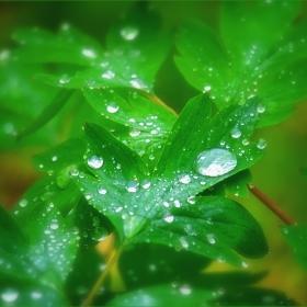Дъждовни капчици