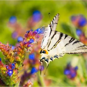 Палитра с пеперуда
