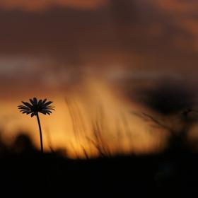 слънцето си отива без драма... то просто е минало...