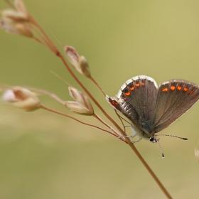 Пеперудени мечти 1