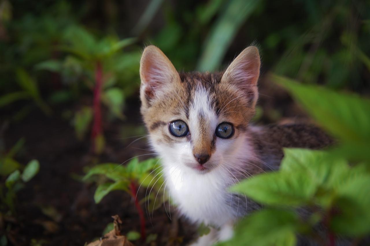 Котето Макс