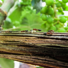 Мравки макро