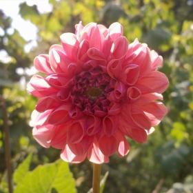 Интересно цвете