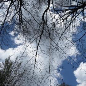 поглед към небето