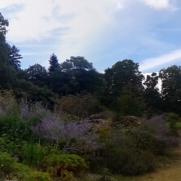 Панорама в ботаническата градина