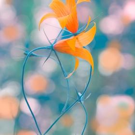 Оцветени в обич