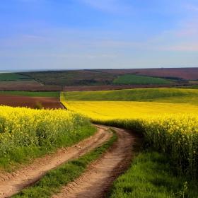 Разцъфнали полета и път без посока...