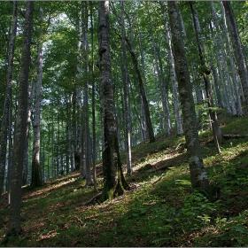 Из гора зелена