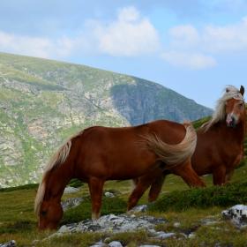 Красотата на дивата природа