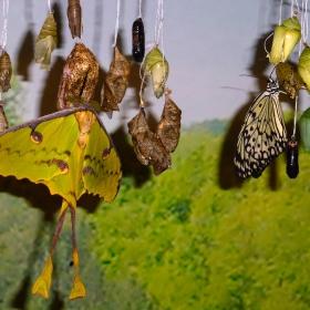 Раждането на пеперудите