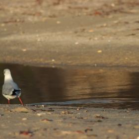 С единия крак във водата
