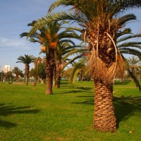 Яркон парк, Тел Авив, 21.01.16