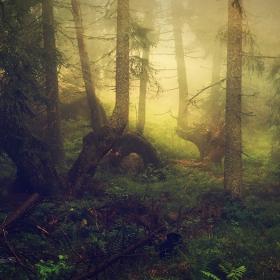 Тайната гора